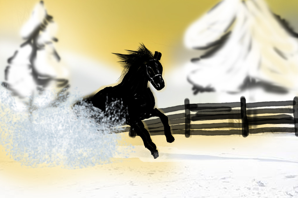 Dutch warmblood stallion kicks up snow as he gallops.