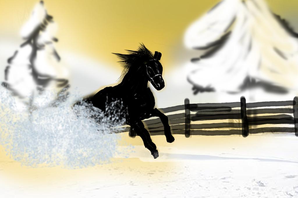 Dutch warmblood stallion kicks up snow as he gallops.